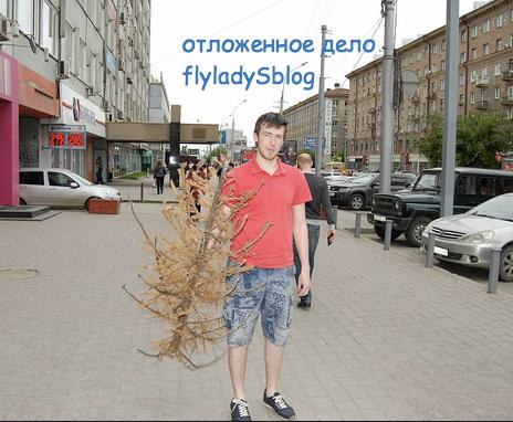 2015-07-23 22-59-25 елка стоит до лета - Поиск в Google